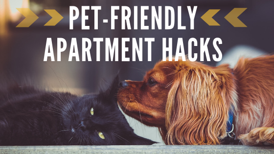 Pet-Friendly Apartment Hacks for Fun Apartment Living